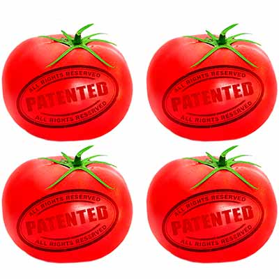 Бесплатные семена томатов