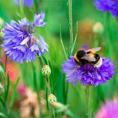 Бесплатный Набор Опылителей Arla Bee Road