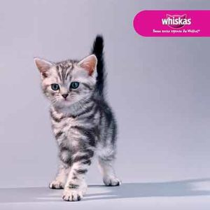 Бесплатный Набор для Котёнка от WHISKAS